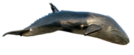 Trinidad Whale Sculpture Artist Connie Butler